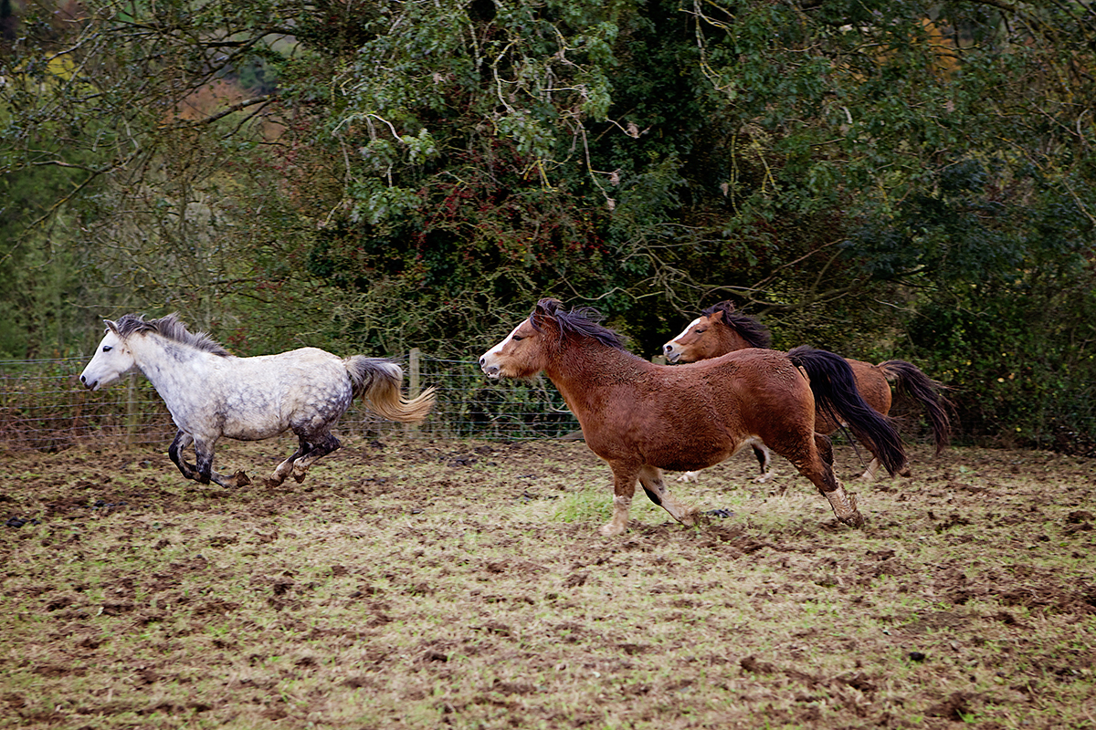 Horse_riding_Cotswolds_Sharron_Goodyear_Photography4
