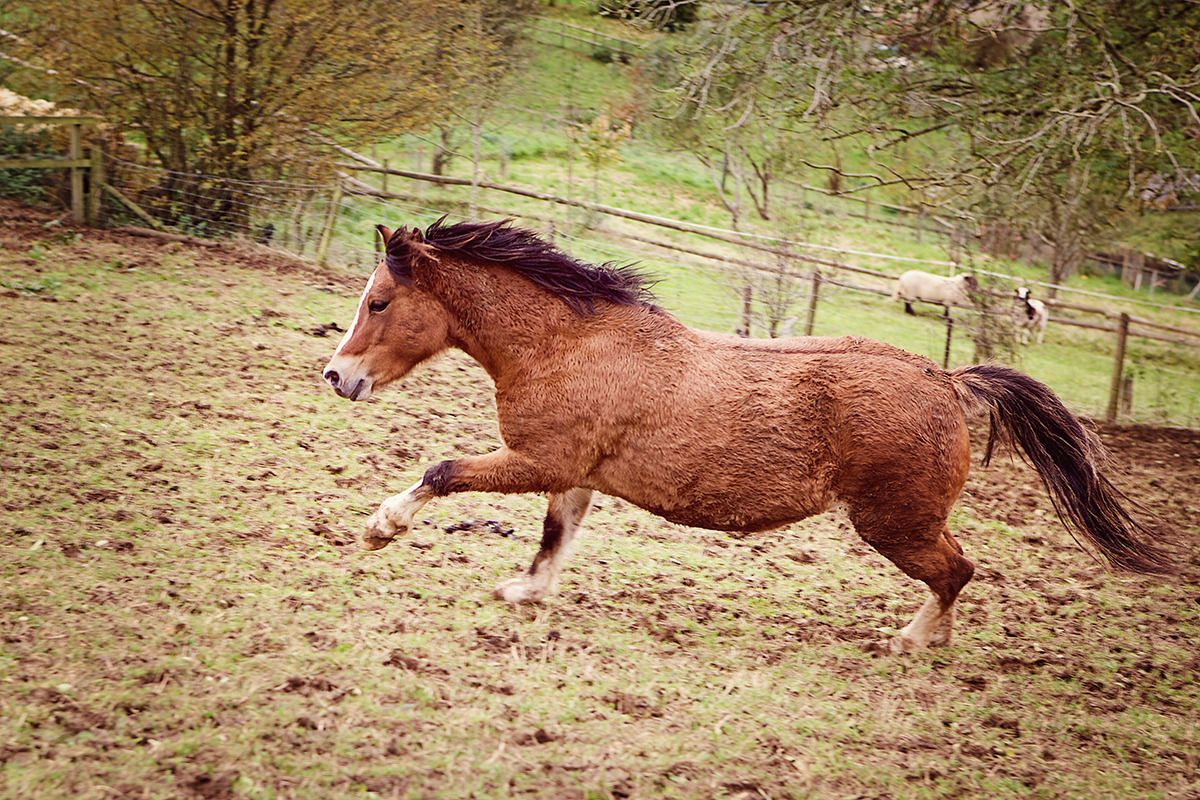 Horse_riding_Cotswolds_Sharron_Goodyear_Photography8