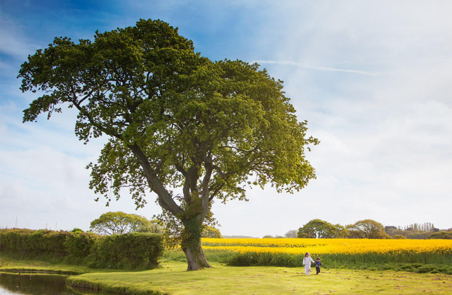 landscape and children photography sussex kent and surrey children-walking-in-a-yellow-field-by-a-tree