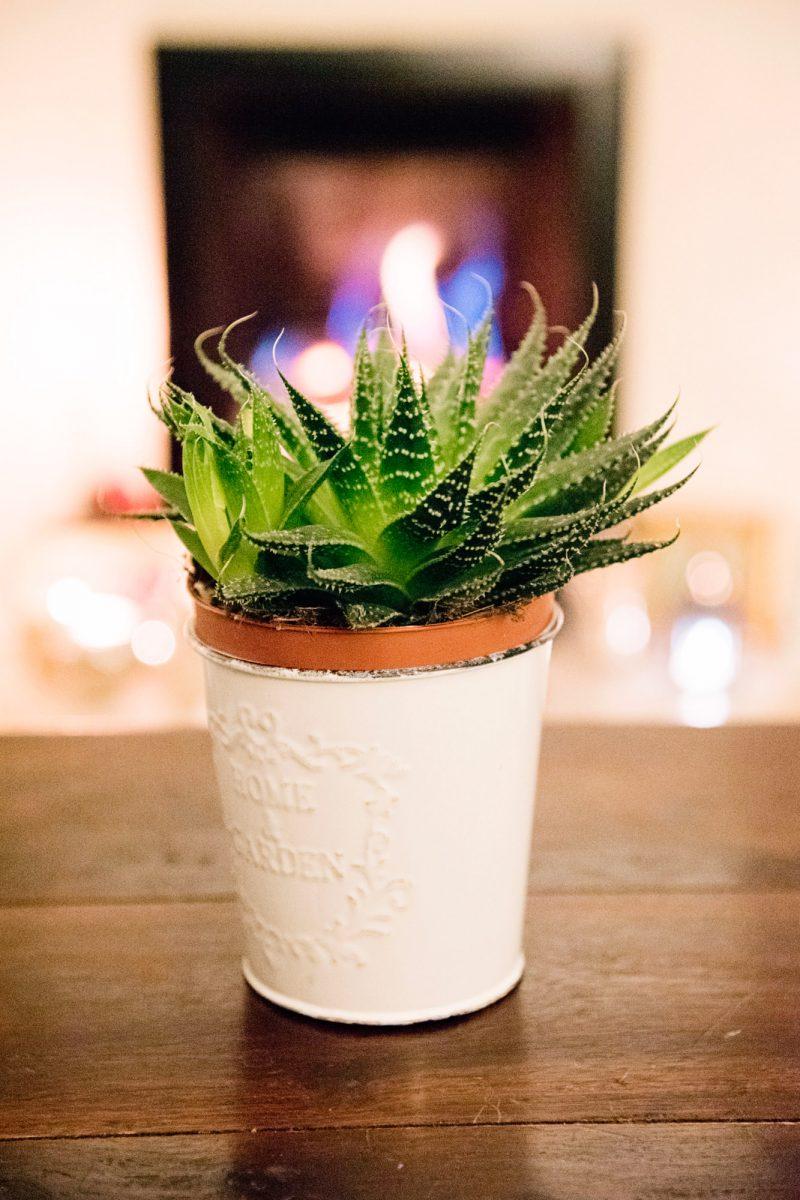 aloe-vera-plant_mini